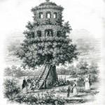 08 Ars Regia F Wiesener Un érable à Matibo(1841)